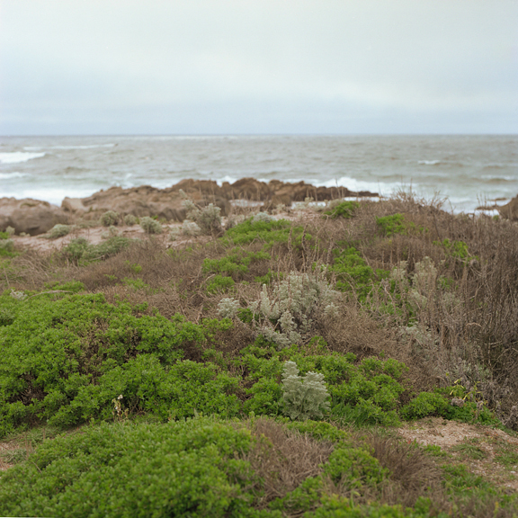pacificgrovecoast1