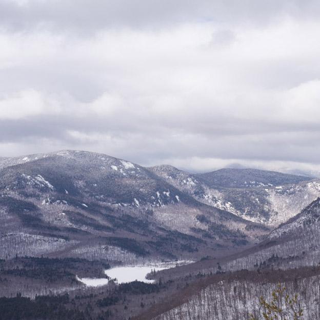 blueberry mountain view