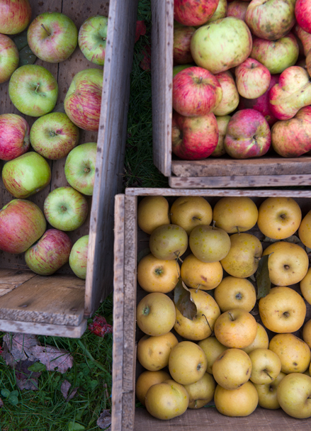 Apples for the Out on a Limb CSA